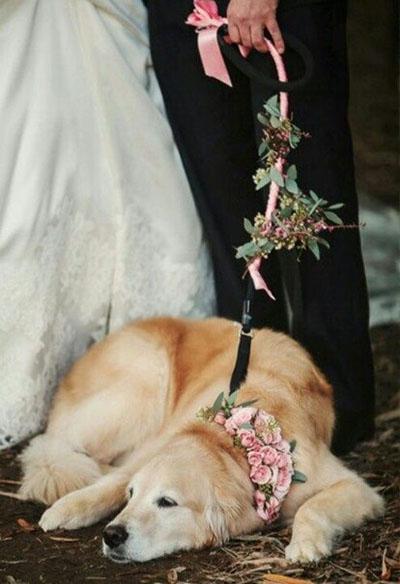 Собаки на свадьбе :)